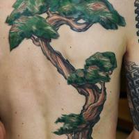 dbfc80fb9764aedbbe87075fd45834cfdb67d958_nadelbaum_tattoo_rücken_osa_wahn.jpg
